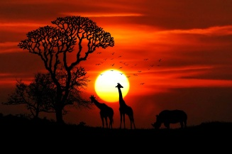 african-migration-safari