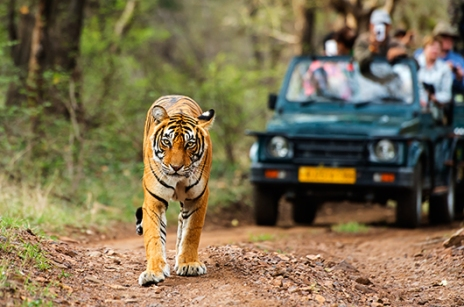 tiger-safaris-india